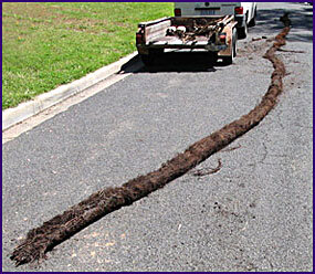 Blocked Drain Canberra from excessive drain root growth that caused a major problem blocked drain